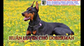 Trường dạy chó tại Tphcm