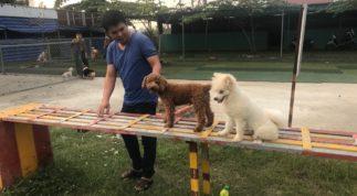 Cách huấn luyện chó đơn giản, cách dạy chó ngoan