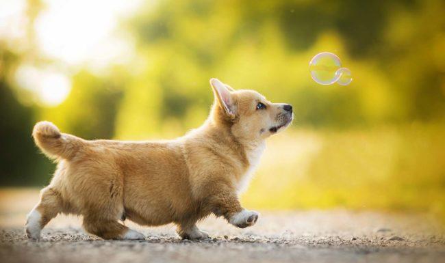 Các giải pháp khắc phục tình trạng chó sủa nhiều